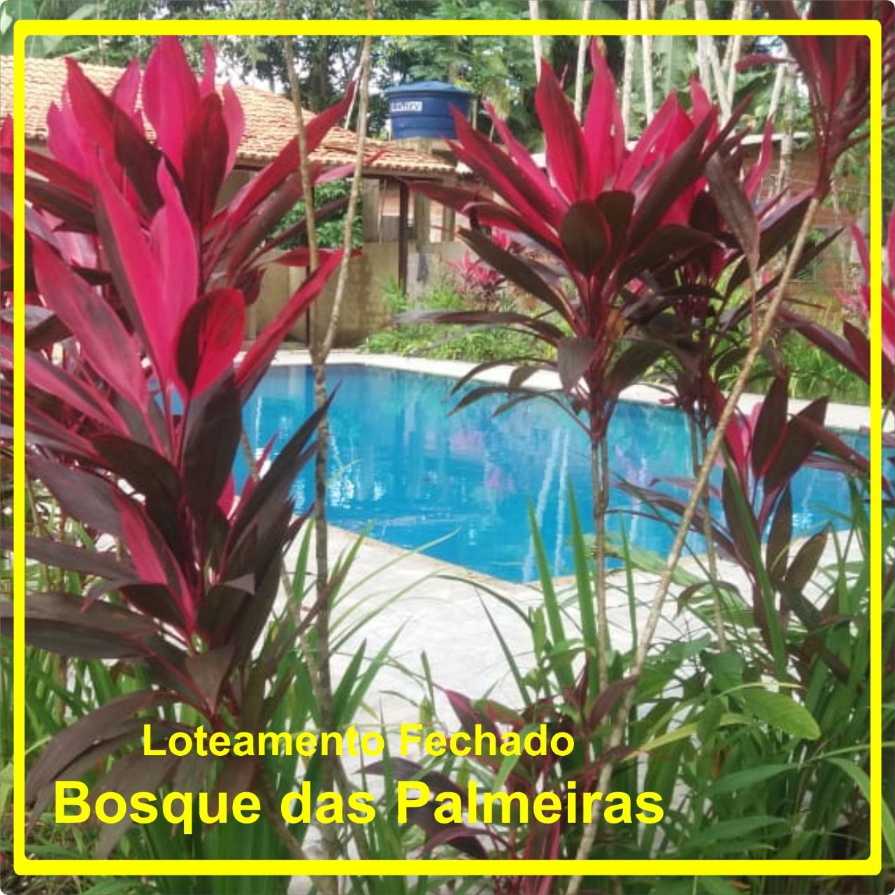 Terrenos-Ananindeua-Bosque-das-Palmeiras-Parreira Corretor-Poupança-ou-Terrenos-Aplicar-Lotes-terrenos-casas-em-Ananindeua-Salinas-Maruda-Pará